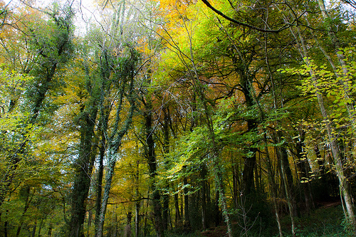 Whitebrook_trees